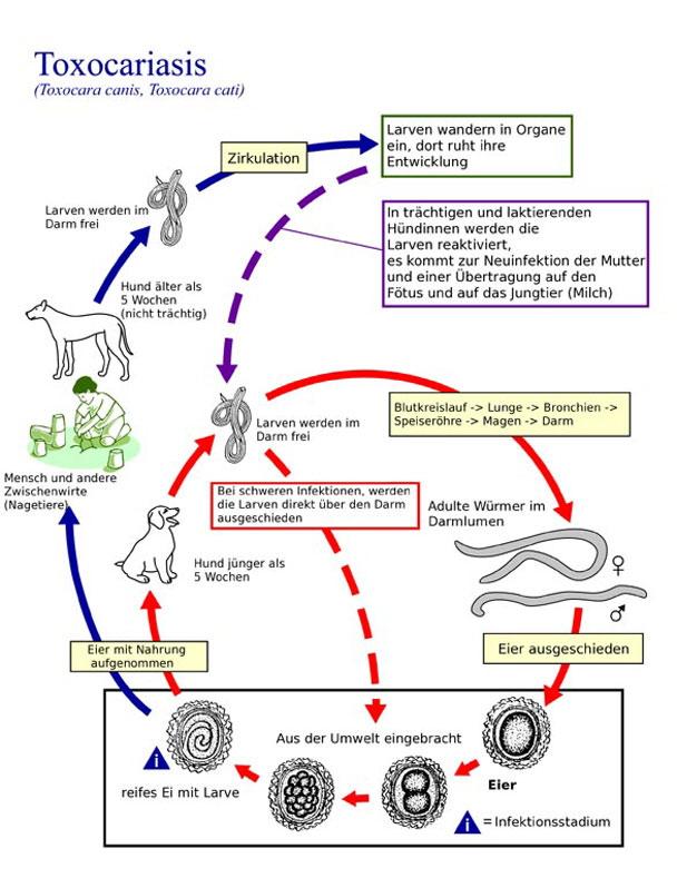 verdauungssystem hund